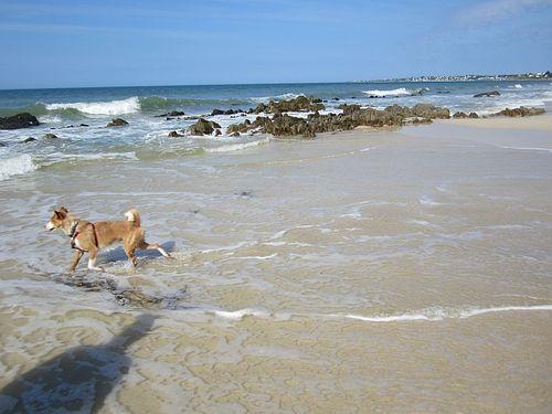 Dogs sea