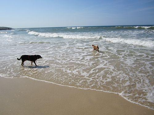 Dogs sea 2