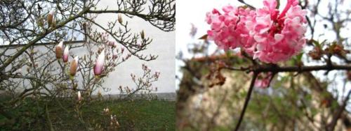 Spring1_