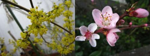 Spring2_